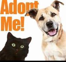 Pet Adoption Listings