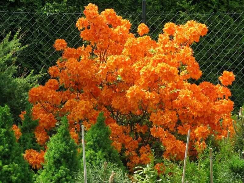 Plants4You-Poland. Call us on +447468453110 or +447471680161